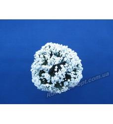 Додатки цветов Бузина цвет белый